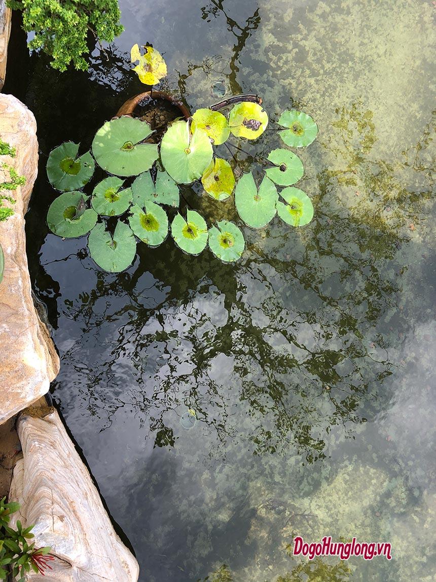 Tham quan hồ cái koi tại khu sinh thái, không gian xanh Đồ gỗ Hưng Long tại Khoái Châu, Hưng Yên