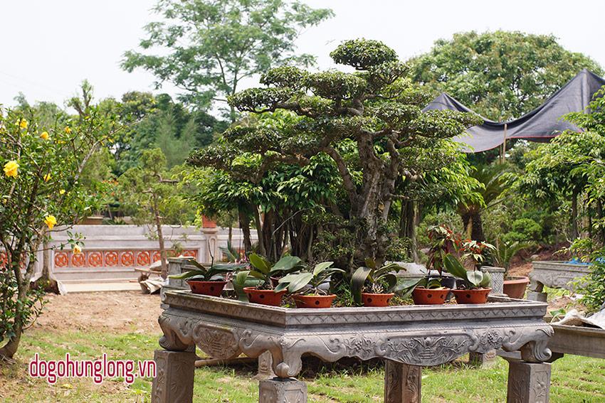Cảnh quan vườn cây cảnh Hưng Long
