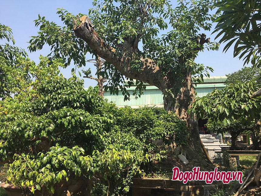 Vườn cảnh Hưng Long, Khoái Châu, Hưng Yên