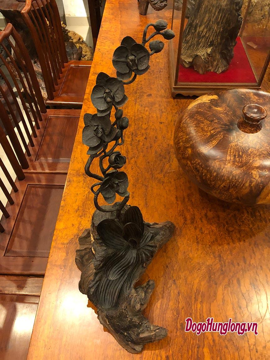 Hoa lan gỗ trắc