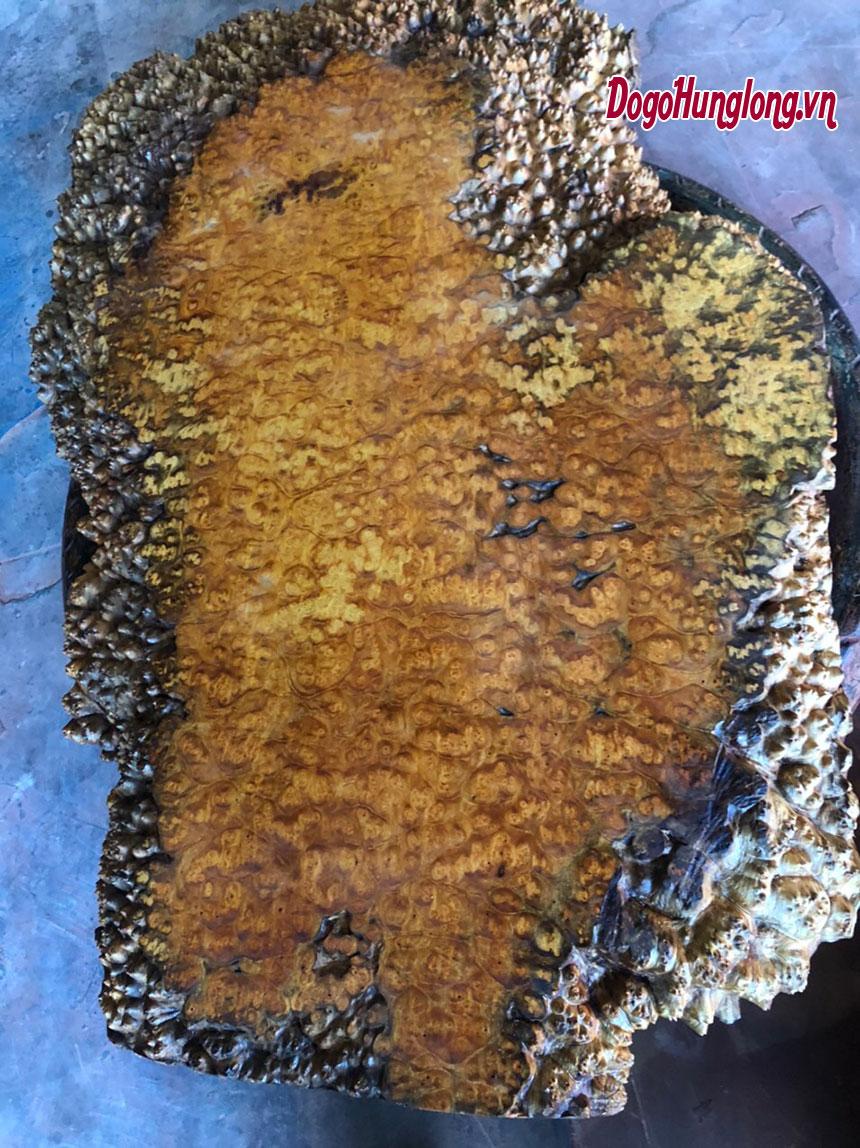 Mặt bàn trà nguyên bản gỗ nu đột biến