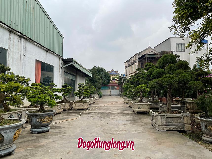 Vườn tùng la hán Đồ gỗ Hưng Long
